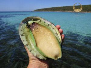 Vàng sống của Đại Dương – Bào Ngư Úc viền xanh